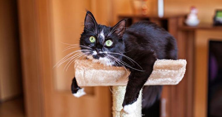 Black cat on scratching post